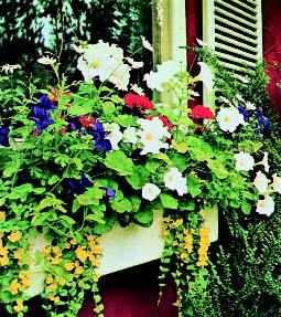 цветы на балконе 2