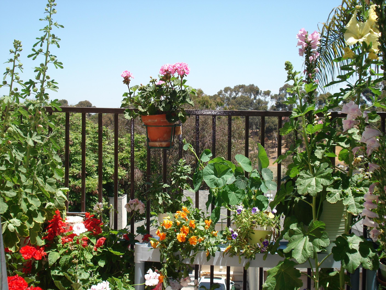 Мой сад мой сад на балконе