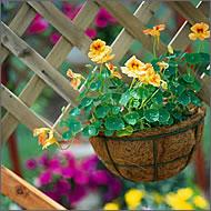 подвесная корзина цветов