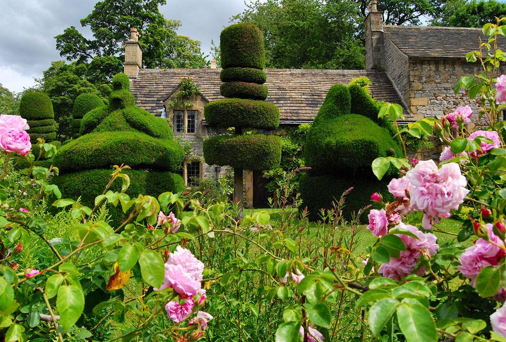 Розы в саду сад в англии